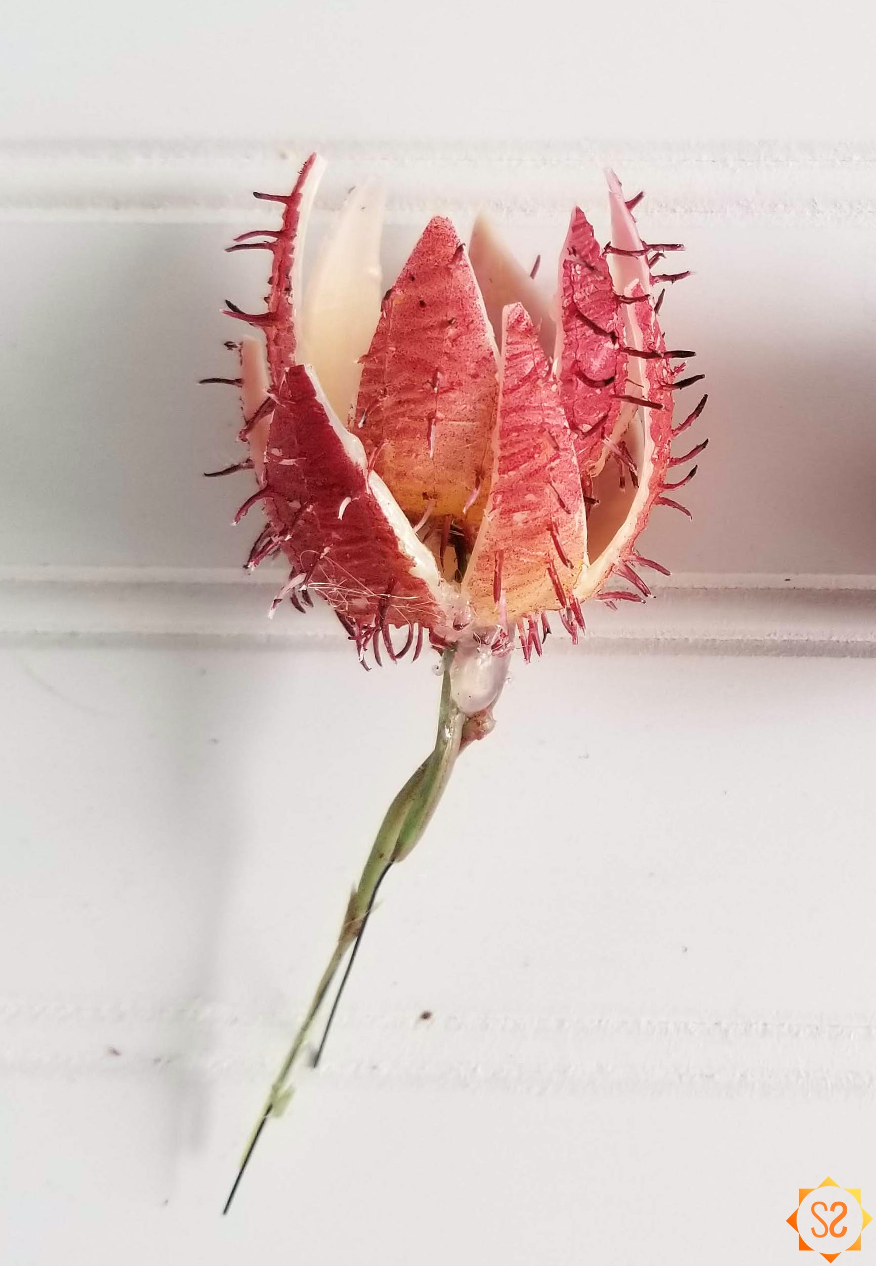 The assembled red flower
